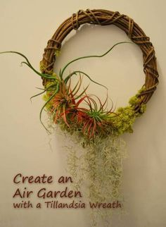 vine wreaths with air plants - Google Search