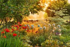 El Blog de La Tabla: fotografia jardines