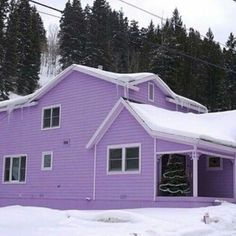 Purple House Winter
