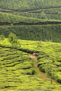 Kerala, God's Own Land, India  Visit www.travelhot.in