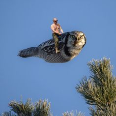 Putin riding #torpedoowl linked on https://www.facebook.com/torpedoowl