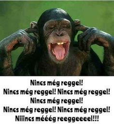 Funny Monkey Pictures, Funny Video Memes, Good Morning, Funny Animals, Life Quotes, Lol, Funny Things, Facebook, Buen Dia