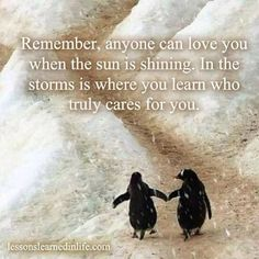 """""""Remember, anyone can love you when the sun is shining. In the storms is where you learn who truly cares for you."""" <-- Penguins are steadfast companions in a storm. Penguin Love Quotes, Penguin Pictures, Love Me Quotes, True Quotes, Live Love, Love You, Favorite Quotes, Best Quotes, Cute Penguins"""