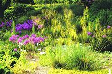 pflegeleicht und sch n pr riegarten f r sonnig trockene b den gardening outdoor alles zum. Black Bedroom Furniture Sets. Home Design Ideas