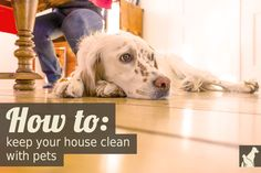 How To: Keep Your House Clean With Pets