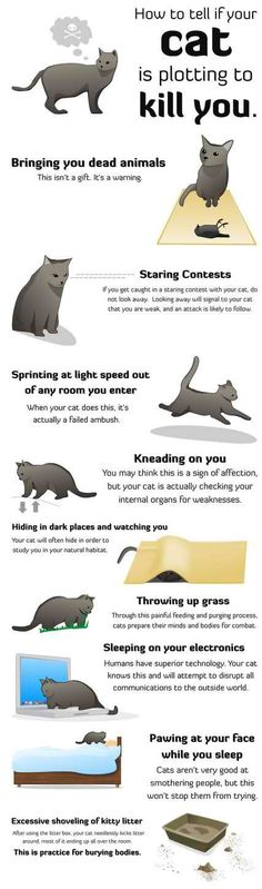 How to Tell if Your Cat is Planning to Kill You | Catster