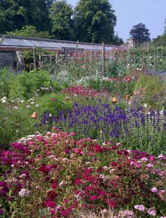 Parham House Gardens, West Sussex. Soon these will be on my back doorstep!