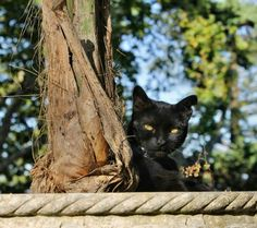 Black cats on Pinterest | Green Eyes and Cats
