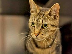 KILEY>>>PITTSBURGH, PA...PetHarbor.com: Animal Shelter adopt a pet; dogs, cats, puppies, kittens! Humane Society, SPCA. Lost & Found.