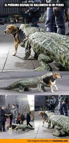 El disfraz para el próximo Halloween de mi perro.