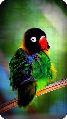 28 Dazzling Exotic Birds You Probably Never Heard Of Kinds Of Birds, All Birds, Cute Birds, Pretty Birds, Beautiful Birds, Animals Beautiful, Cute Animals, Exotic Birds, Colorful Birds