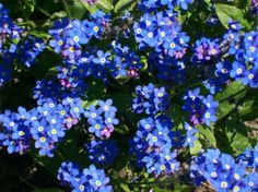 378114__tiny-blue-flowers_p.jpg (810×606)