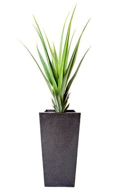Pandanus Plants Set In Fibreglass Planters Mood Board Interior, Interior Styling, Real Plants, Potted Plants, Fiberglass Planters, Black Granite, Logo Food, Artificial Plants, Mood Boards