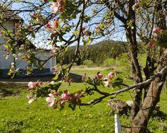 Mai, Plants, Colorful Flowers, Landscape, Plant, Planets