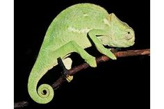 How to Make a Chameleon Costume | eHow