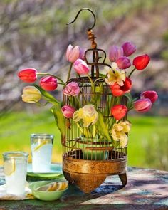 Tulip spring centerpiece: An antique birdcage perfectly supports a collection of colorful tulips. More spring centerpieces: http://www.midwestliving.com/homes/seasonal-decorating/50-bright-and-easy-spring-decorating-ideas/?page=4