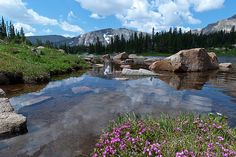 'Lion Lake at Water's Edge', a fine art mountain landscape photograph by Lynn Cyrus / Cascade Colors. Clouds begin to roll in on a summer morning in Wild Basin, near water level at Lion Lake. Swamp Laurel wildflowers bloom in a patch of soil beside the water, and forest and mountain peak rise in the background. This wilderness is part of Rocky Mountain National Park, in the Front Range of the Colorado Rocky Mountains.