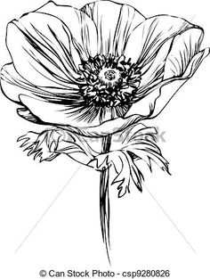 flower illustration black and white - Google Search