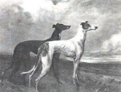 """Greyhound""  by Maud EARL - 1900"