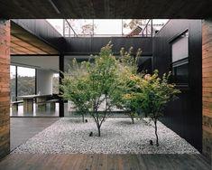 Un patio planté d'arbres