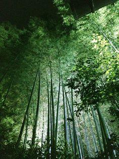 Kyoto Seirenin
