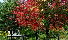 Fall Colors.....
