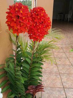 Garden Flowers - Annuals Or Perennials Rojo Divino - Strange Flowers, Rare Flowers, Flowers Nature, Exotic Flowers, Amazing Flowers, Beautiful Flowers, Orchids Garden, Orchid Plants, Orchid Flowers