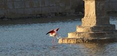 Salt pans are important environments for migratory birds. But they're under threat. We've had a big win in Malta…