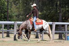 Appaloosa, Animals And Pets, Horses, Pets, Horse, Appaloosa Horses