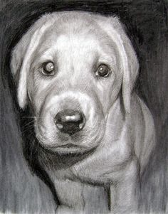Original PET PORTRAIT Drawing from a Photograph By Animal Artist Paul Hinks