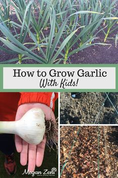 Of all the crops you can grow with kids, garlic is one of the easiest and most rewarding. Read on to learn how to grow garlic with kids in just about any container or garden bed. You can tuck it in with other plantings or save a whole bed just for this va Gardening For Beginners, Gardening Tips, When To Harvest Garlic, Bonsai Tree Types, Outdoor Activities For Kids, Learning Activities, K Crafts, Garden Solutions, Grow Garlic