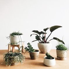 Everything you need to know about caring for indoor plants - Vogue Living