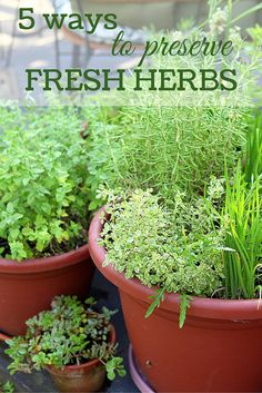 5 ways to preserve fresh herbs. Drying herbs is a perfectly fine way to store your garden-fresh flavorings for use throughout the year, but it isn't the only game in town. You can preserve herbs in many creative ways that can add some lift to your cold-weather culinary creations.