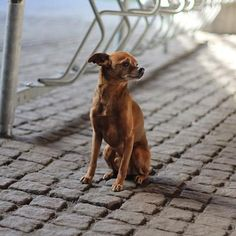 Infezione all'orecchio del cane - Rimedi naturali