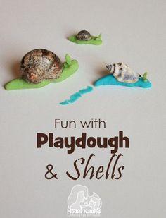 Playdough and Shell Activity