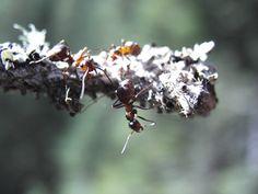 ameisen klettern auf den baum ;-) Ant, Climbing, Trees
