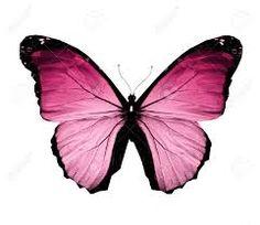 Resultado de imagen para mariposas rosas png
