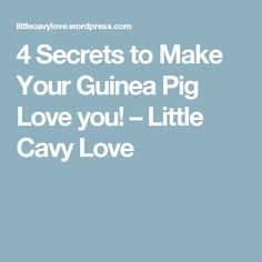 4 Secrets to Make Your Guinea Pig Love you! – Little Cavy Love