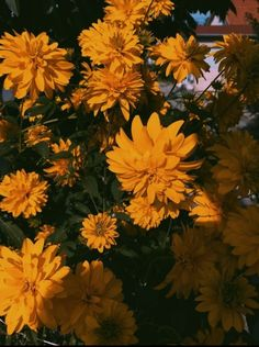 Wanna Be Aesthetic? - ʏᴇʟᴏᴏᴡ - Page 2 - Wattpad photography orange Wanna Be Aesthetic? Yellow Aesthetic Pastel, Orange Aesthetic, Nature Aesthetic, Flower Aesthetic, Aesthetic Images, Aesthetic Backgrounds, Aesthetic Wallpapers, Aesthetic Design, Pretty Flowers