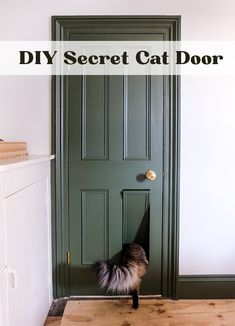Under Stairs Cupboard, Pet Door, Cat Room, Space Cat, Cat Furniture, Diy Stuffed Animals, Crazy Cats, Home Projects, Decoration
