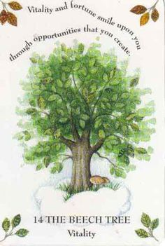 Tree Magick by Gillian Kemp The beautiful Beech tree, elephant-gray with light-brown buds in Winter, predicts a wonderful, budding phase for you.  Because its copper-yellow leaves fall only when new leaves begin to sprout, the Beech advises that you make certain of your future rather than leave things to chance.   You may need to push, like leaves pushing out from their buds in Springtime.