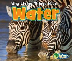 """What is water? -- Living things and water -- Why do living things need water? """"Readers lean about how living things use water, how plants and animals take in water, and why all living things need water to stay alive. 1st Grade Science, Science Curriculum, Kindergarten Science, Science Books, Science Classroom, Classroom Ideas, Preschool, Library Lesson Plans, Library Lessons"""