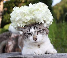 ⇑テマリカンボク の画像 のせ猫オフィシャルブログ Powered by Ameba