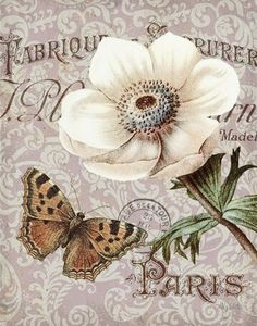 Inspiration Memories of Paris III by Abby White ~ floral art Vintage Labels, Vintage Ephemera, Vintage Posters, Decoupage Vintage, Decoupage Paper, Butterfly Flowers, Flower Art, Butterflies, Vintage Pictures