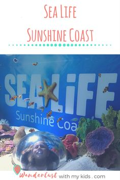 Sea Life Mooloolaba, Underwater World Mooloolaba, Sunshine Coast Attractions, Sea Life, aquarium, underwater, Sunshine Coast Australia, things to do