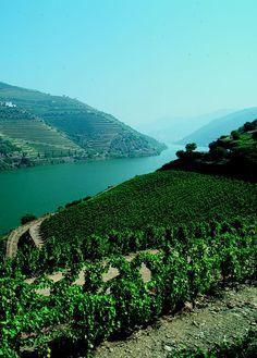 Douro Valley, Portugal #Portugal