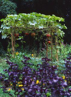 Compagnia del Giardinaggio: Gli orti urbani