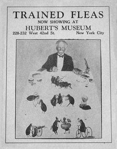 """Sideshow Poster, """"Trained Fleas"""""""