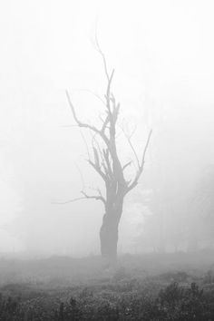 Halloween Photo-Spooky Tree Silhouette Night Misty Fog Silver Grey Gray In The Night Standing Out Woodland Nature Photo12x18