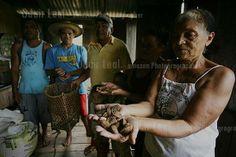 Cadeias produtivas apresentaram tantas mudanças positivas quanto a da castanha-do-brasil no Estado do Acre.© 2013 Odair Leal. Todos os direitos reservados. Foto: Odair Leal/AmazonPhotoNews